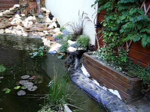 Vijver met waterval youtube for Goedkope voorgevormde vijver