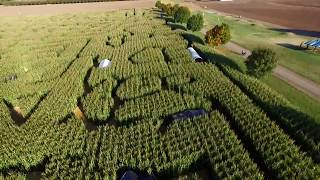 Corn maze at Lone Pine Farms