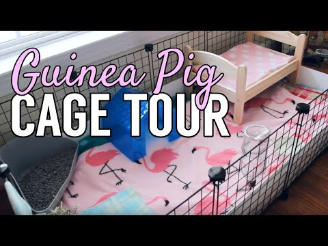 Guinea Pig Cage Cleaning || Myperfectpetworld