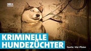 Das skrupellose Geschäft mit Hunde-Welpen