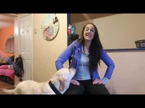 5 WAYS TO IMPROVE YOUR DOGS GREETING HABITS