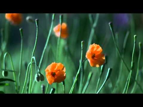 Orange flowers| Оранжевые цветы