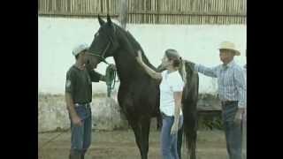 Criador de cavalos da raça Mangalarga Marchador thumbnail