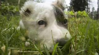 Собака в деревне // Из города в деревню