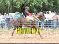 Video de Bella Vista