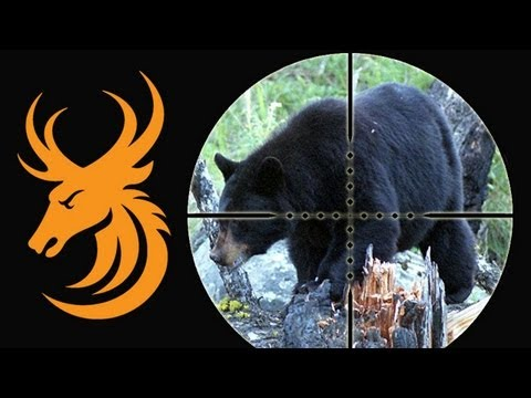 Black Bear Hunt In Newfoundland