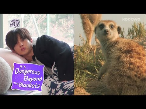 Kim Min Seok Looks Like a Meerkat! [It's Dangerous Beyond The Blankets Ep 1]