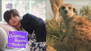 Baixar Kim Min Seok Looks Like a Meerkat! [It's Dangerous Beyond The Blankets Ep 1]