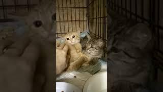 как приручить дикого котенка
