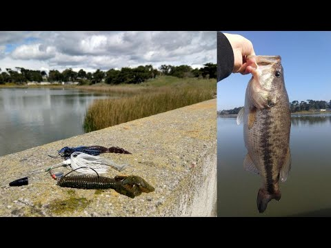 How To Catch Bass In Reeds | Best Lures | Lake Merced San Francisco