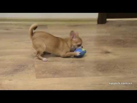 Как сделать собаку мопса из Lego \ How to make a pug dog from Legoиз YouTube · С высокой четкостью · Длительность: 3 мин13 с  · Просмотры: более 3000 · отправлено: 16.05.2016 · кем отправлено: LegoDesign