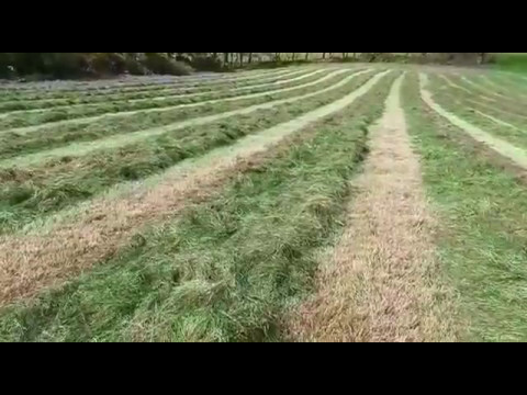 Silage Cutting 2017