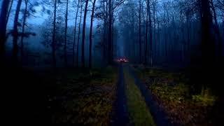 Skąd wiem gdzie jest Drewno #Vlog3 Transport Leśny Dzień pracy Drzewiarza
