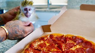 this-miniature-monkey-tries-pizza-for-the-first-time