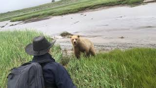 Real Grizzly Bear Charge Handled Live