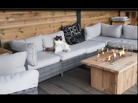 This Cat Knows HowTo Lounge, Ibiza Style  (Timo the Ragdoll Cat)
