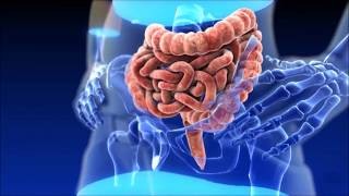 Chronic Diarrhea, IBD, IBS, bloating, intoxication - Smecta is a best solution