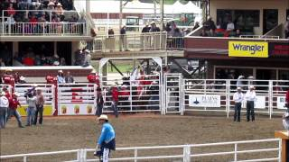 Steer Events at the Calgary Stampede July 5 2015