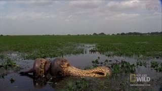 Ужасы Амазонии   11 Страшных Cуществ Амазонки 2017