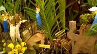 Exposición de orquideas 2012- Feria Flor del Espíritu Santo, Las Minas, Panamá