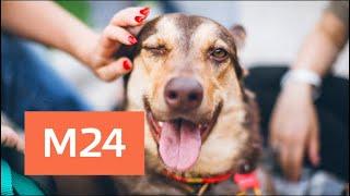 Выставка кошек и собак из приютов проходит в столице - Москва 24