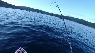 Ловля терпуга с sup board Рыбалка с сапа