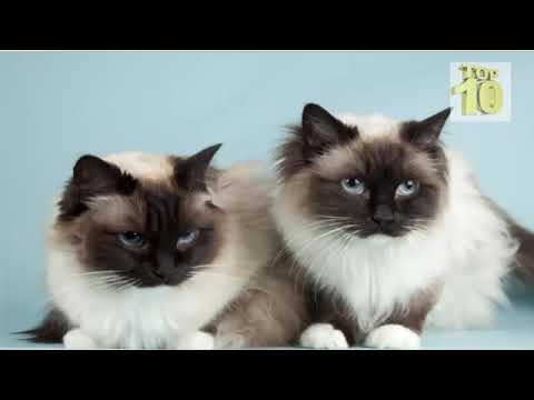 TOP 10 Beautiful Cats Breeds in World || World Famous cats 2017 || cute cats
