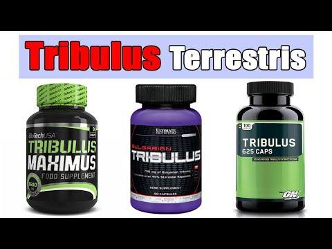 Трибулус Террестрис какой лучше и как выбрать