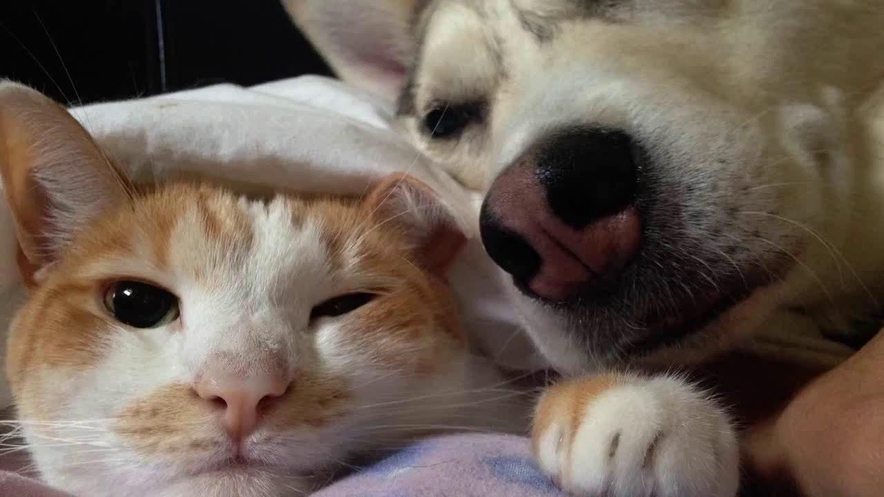 Catelusi draguti deranjeaza pisicile filmulete amuzante 2016