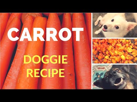 AIR FRY CARROTS | How To Make Dog Food | Dog Chef Episode 1