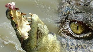 Top 10 Crazy Crocodile Attacks