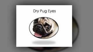 5 Common Pug Eyes Problems