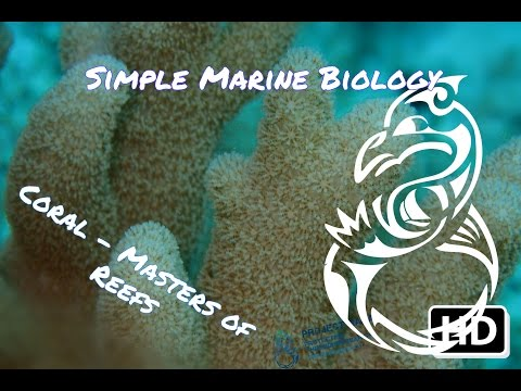 Corals - Masters of Reef Building and Marine Life (Simple Marine Biology #4)