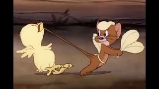 tom y jerry en español - Fine Feathered Friend