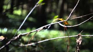 Mariusz Duda / Steven Wilson – The Old Peace (Cover)