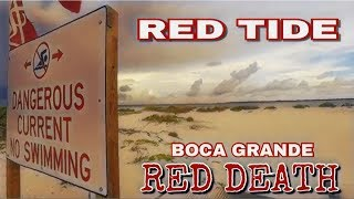 FLORIDA RED TIDE DISASTER KILLING EVERYTHING!!
