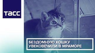 Бездомную кошку увековечили в мраморе