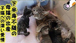感動 泣ける話・下半身不随で死の淵を彷徨っていた母猫お腹の赤ちゃんへの深い愛情が、母猫の命を繫ぎ止める・招き猫ちゃんねる thumbnail