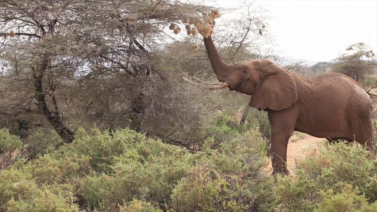 Elephants And Weaver Bird Nests Youtube