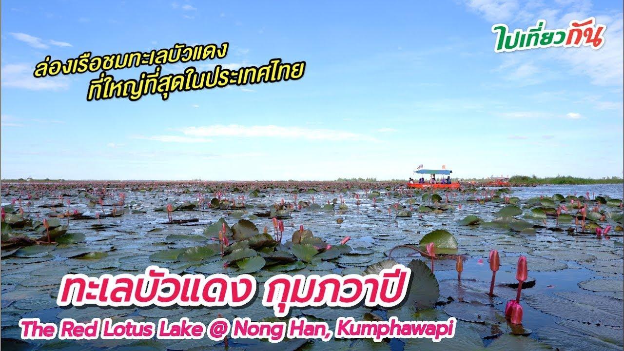 ทะเลบัวแดง กุมภวาปี ล่องเรือชมทะเลสาบบัวแดงที่ใหญ่ที่สุดในประเทศไทย : ไปเที่ยวกัน