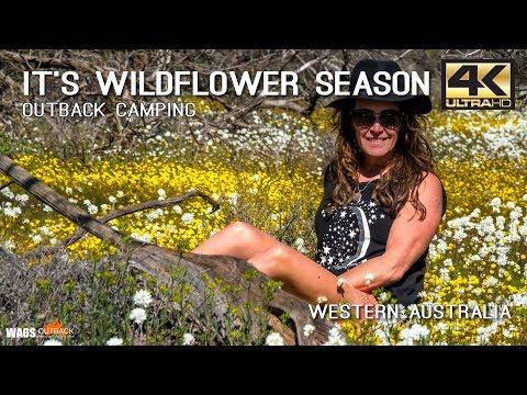 It's Wildflower Season Camping Western Australia