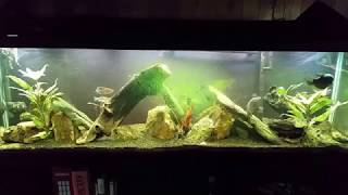 125 Gallon Planted Tank: Before and After Tank Maintenance (7/20/17)