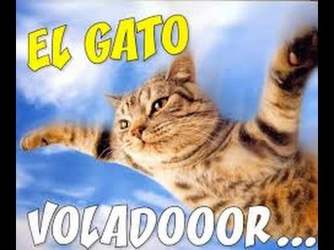 EL GATO VOLADOR!! :D LEAGUE OF LEGENDS