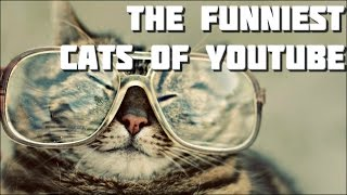 Funny Cats Compilation 3 - The Funniest Cats of Youtube