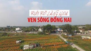 Đẹp rực rỡ làng hoa Thái Hòa ven sông Đồng Nai ngày Tết