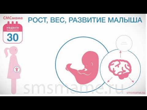 30 неделя беременности - декретный отпуск, анализы и врачи.