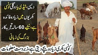 Goat Farming in Pakistan | Types Of Goats | Desi Goats Farming Urdu | Dogli And Tydi Goats Farming