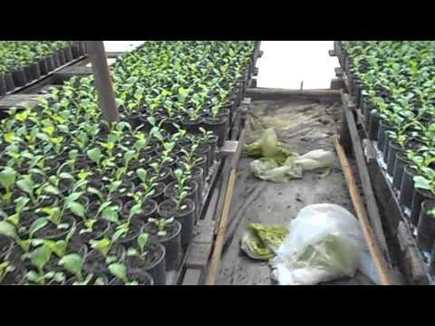 видео: отопление в теплице часть 1