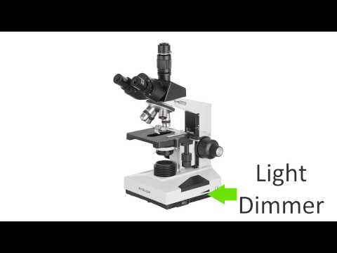 Compound microscope diagram quiz electrical work wiring diagram compound microscope parts quiz microscope help rh microscopehelper com compound light microscope diagram quiz compound microscope ccuart Choice Image