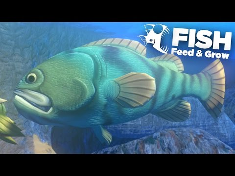 GOLIATH GROUPER!!! - Feed And Grow | Ep9